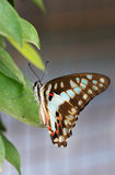 Monarch butterfly. Beautiful shot of monarch butterfly stock photography
