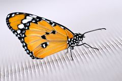 Monarch butterfly on cloth Stock Image