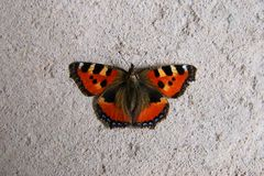 Monarch butterfly on the concrete floor. Closeup royalty free stock image