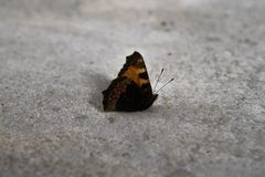 Monarch butterfly on the concrete floor. Closeup stock photo