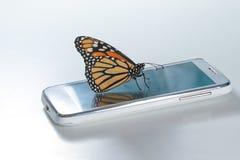 Monarch Butterfly Danaus plexippus on the white cell phone, clean energy. Monarch Butterfly Danaus plexippus on the cell phone ecological energy concept royalty free stock photos