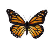 Monarch butterfly. Digital illustration of a monarch butterfly Stock Photography
