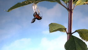 Monarch butterfly emerges from chrysalis stock video