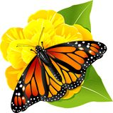 Monarch butterfly on the flower. Monarch butterflies on the yellow flower Royalty Free Stock Photography