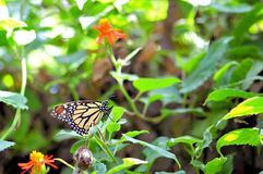 Monarch butterfly on green leaf in aviary stock photography