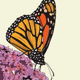 Monarch Butterfly  illustration Royalty Free Stock Photo
