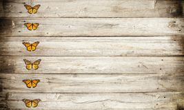 Monarch butterfly insects in a row on an old rustic wood. Monarch butterfly insects in a row on an old grunge rustic wood background with copy space Royalty Free Stock Image