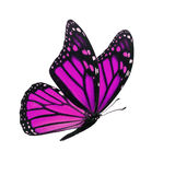 Monarch butterfly isolated. Beautiful pink monarch butterfly isolated on white background Stock Photo