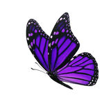 Monarch butterfly isolated. Beautiful purple monarch butterfly isolated on white background Stock Photos