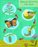 Monarch Butterfly Life Cycle Royalty Free Stock Images