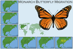 Monarch Butterfly Migration. Illustration of Monarch Butterfly Migration Stock Images
