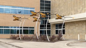 Monarch butterfly sculpture by David Hickman outside Parkland Simmons Ambulatory Surgery Center, Dallas, Texas. Pictured is a Monarch butterfly sculpture by royalty free stock photography