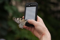Monarch Butterfly sits Mobile phone in the botanical garden Montreal Stock Photos