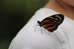 Monarch Butterfly on Shoulder. A monarch butterfly sitting on the shoulder if a girl royalty free stock image