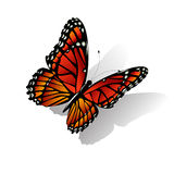 The Monarch butterfly  vector Stock Photography