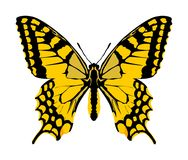 Monarch Butterfly vector with open wings. royalty free illustration