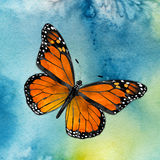Monarch Butterfly. Watercolor depiction of a Monarch butterfly flying against a blue sky stock illustration