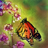 Monarch Butterfly - Watercolor Painting. Digital watercolor painting of a colorful monarch butterfly hanging onto soft pink flower blossoms Stock Images