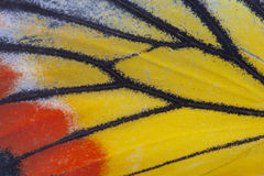 Monarch Butterfly Wing. Macro close up of an Monarch Butterfly Wing Stock Photos