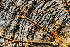 Monarch Butterfly Wings Abstract Pattern. Close Up royalty free stock image