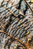 Monarch Butterfly Wings Abstract Pattern. Close Up stock photo