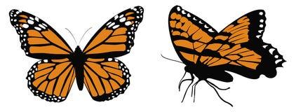 Monarch butterflys. Cartoon illustration of Monarch butterflys Stock Image