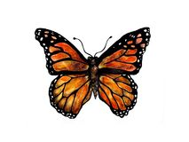 Monarch illustration. An illustration of a monarch butterfly isolated against a white background Stock Images