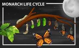 Monarch life cycle diagram vector illustration