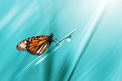Monarch orange beautiful butterfly against the background of fantastic blue grass with a drop of dew. Summer spring art background. Free space for text stock photos