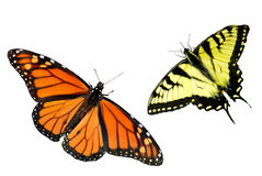 Monarch und Tiger Swallowtail Basisrecheneinheits-Hintergrund Stockfoto