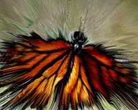 Monarch v Windshield. Monarch Butterfly in splat Stock Images