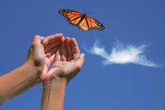 monarcha motyla uwolnieni Obrazy Royalty Free