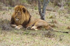 monarcha odpoczynek Fotografia Royalty Free