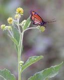 monarcha z gotowa się zdjęcie royalty free