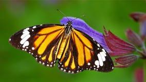 Monarchbasisrecheneinheit Lizenzfreie Stockfotos