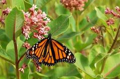 Monarchbasisrecheneinheit Stockbild