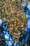 Monarchcluster royalty-vrije stock afbeelding