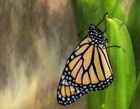 Monarchfalter balanciert auf grünem Stamm Stockbild