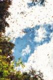 Monarchfalter, die bei Michoacan, Mexiko ankommen Lizenzfreie Stockbilder