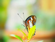 Monarchfalter im Garten stockfotografie