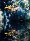 Monarchfalter mit einer Reflexion lizenzfreies stockfoto