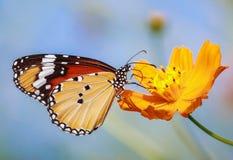 Monarchfaltermakro lizenzfreie stockbilder