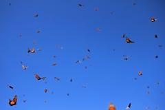 Monarchiczni motyle, Michoacan, Meksyk zdjęcia stock