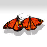 Monarchiczny Motyli Remis Fotografia Stock
