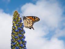 Monarchvlinder stock fotografie