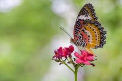 Monarchvlinder Royalty-vrije Stock Foto
