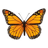 Monarchvlinder. Hand getrokken vectorillustratie Stock Afbeeldingen