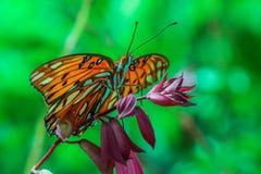 Monarchvlinder op een bloem wordt neergestreken die royalty-vrije stock afbeeldingen