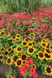 Monarda Didyma, Bee balm flowers Stock Photos