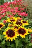 Monarda Didyma, flores del bálsamo de abeja Foto de archivo
